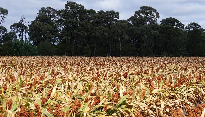 Ethanol Crops Subsidies