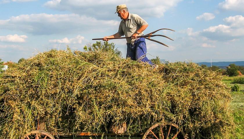South Africa farmer